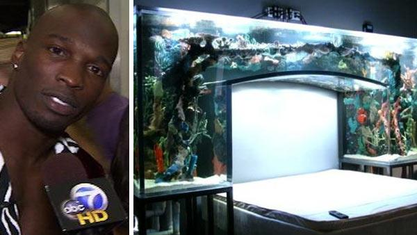 Chad Ochocinco talks to OnTheRedCarpet.com after a performance of 'Dancing With The Stars' in May 2010. / Chad Ochocinco's 'fish tank' bed headboard, as seen in a photo posted on the Facebook page of manufacturer Acrylic Tank Manufacturing.