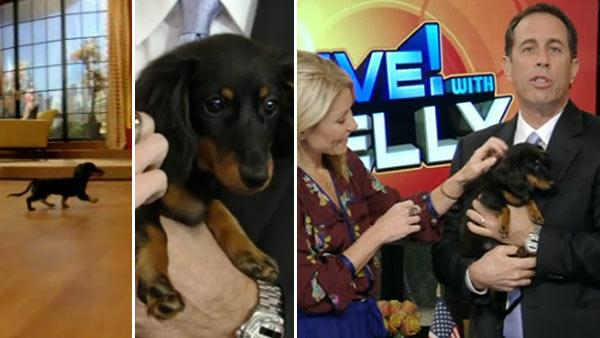 Kelly Ripa and Jerry Seinfeld and his dog appear on 'LIVE! with Kelly' on Nov. 22, 2011.
