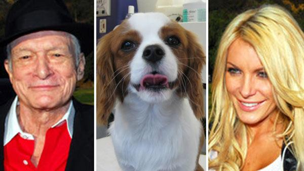 Left / Right: Hugh Hefner and Crystal Harris appear in a photo posted on his Twitter page in December 2010. / Charlie the Cavalier King Charles Spaniel is pictured in a May 2010 photo posted on Crystal Harris' Twitter page.