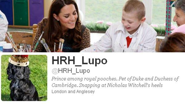 Kate Middleton, the Duchess of Cambridge, helps Luis Lee, aged 8, with his painting during a visit to the Art Room facilities at Rose Hill Primary School in Oxford. / Lupo, her puppy, appears on his fake Twitter page. - Provided courtesy of The Prince of Wales press office / twitter.com/HRH_Lupo