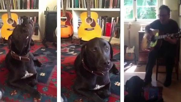 Kiefer Sutherland plays guitar as a dog howls, as seen in this video posted on the actors official Twitter page on April 20, 2012. - Provided courtesy of yfrog.com/61vdlmz