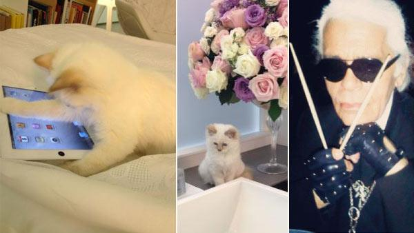 Karl Lagerfelds cat Choupette appears in photos from the designers official Facebook page and V Magazines Twitter page. /  Karl Lagerfeld appears in a photo posted on V Magazines Twitter page on March 21, 2012. - Provided courtesy of facebook.com/karllagerfeld / twitter.com/vmagazine / instagr.am/p/IcNw9ike_Z/