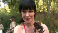 Pauley Perrette talks to OnTheRedCarpet.com at the Greater Los Angeles Zoo Associations 42nd Annual Beastly Ball on Saturday, June 16, 2012. - Provided courtesy of OTRC