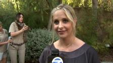 Sarah Michelle Gellar talks to OnTheRedCarpet.com at the Greater Los Angeles Zoo Associations 42nd Annual Beastly Ball on Saturday, June 16, 2012. - Provided courtesy of OTRC