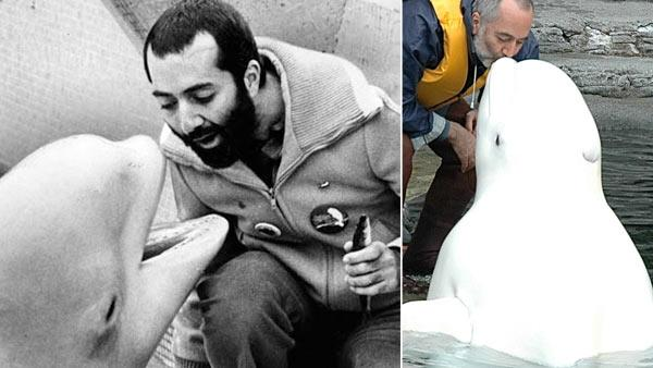 Raffi Cavoukian and Kavna the baby beluga whale, appear in a photo from 1980, posted on the singers official Twitter page. / Raffi Cavoukian and Kavna the baby beluga whale appear in a recent photo posted on the singers official Twitter page. - Provided courtesy of pic.twitter.com/mqCrTSAB / pic.twitter.com/MoPhGX91