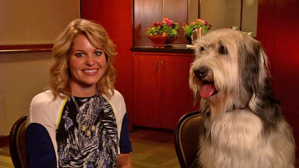 Candace Cameron Bure talks 'Puppy Love' with her pup co-star