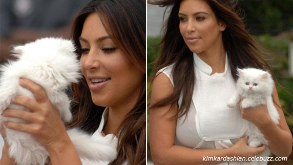 Kim Kardashian and her Persian kitten Mercy appear in photos posted on her official website on September 17, 2012. - Provided courtesy of kimkardashian.celebuzz.com
