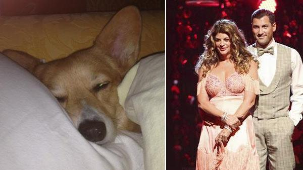 Kirstie Alley appears on  Dancing With The Stars: All-Stars on October 17, 2012. / Kirstie Alleys puppy May appears in a photo from her official Twitter page. - Provided courtesy of OTRC / twitter.com/kirstiealley