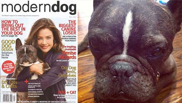 Denise Richards and her dog, Hank, are pictured on the cover of Modern Dog magazines Fall 2011 issue. - Provided courtesy of twitter.com/DENISE_RICHARDS/status/293597709200404481 / instagr.am/p/UxmpExSnIY/