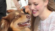 Amanda Seyfried cuddles with her dog, Finn, after leaving the Ed Sullivan Theater in New York City on July 30, 2013. She had appeared on The Late Show With David Letterman to promote her newest film, Lovelace. - Provided courtesy of Humberto Carreno / startraksphoto.com