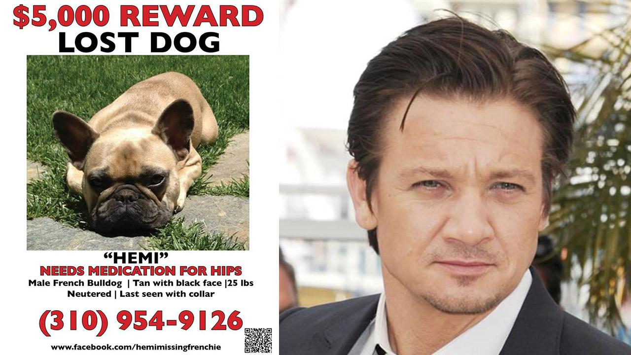 Jeremy Renners dog, Hemi, appears on this flyer posted on Facebook in July 2013. The dog went missing on the 19th. / Jeremy Renner appears at a photo call for the movie The Immigrant at the 66th Annual Cannes Film Festival on May 24, 2013.