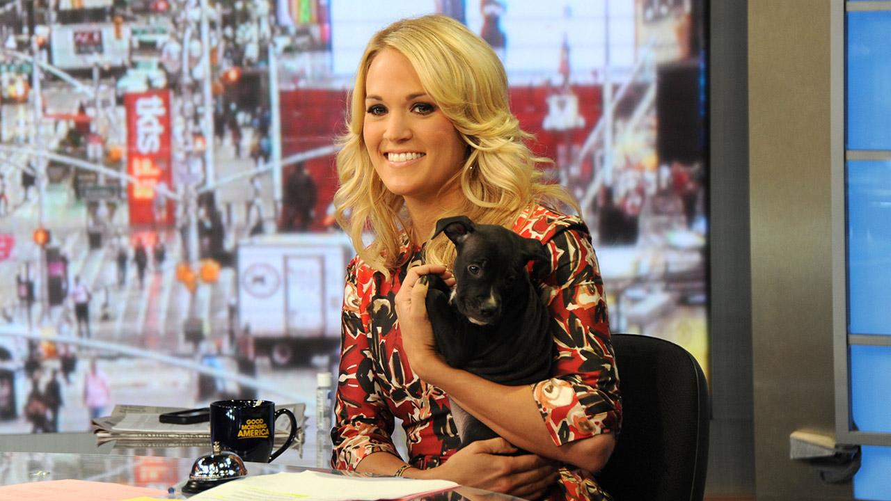 Guest co-host Carrie Underwood appears on ABCs Good Morning America (GMA) with a puppy -- who is up for adoption -- on Monday, Aug. 12, 2013.