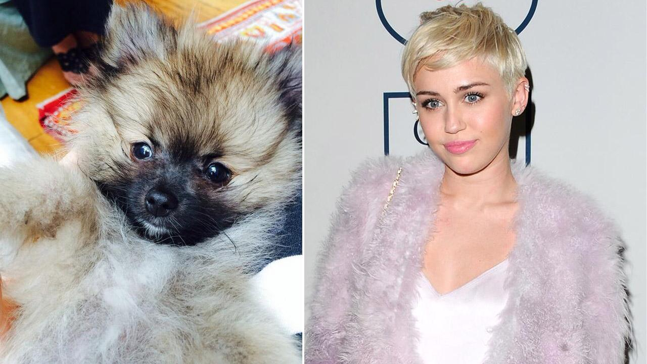 Miley Cyrus do Moonie appears in a photo posted on her Twitter account on Friday, April 4, 2014. / Cyrus appears at the Pre-GRAMMY Gala And Salute To Industry Icons in Beverly Hills, California on Jan. 25, 2014.
