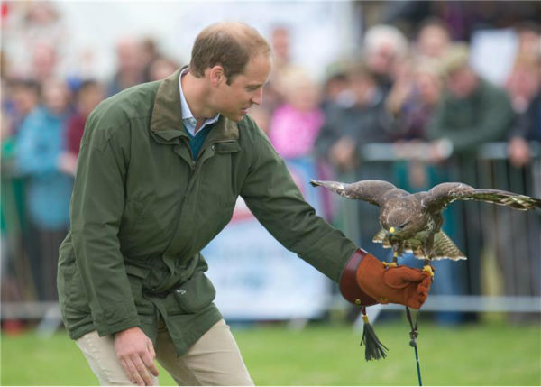 Prince William, Duke of Cambridge, holds a Harris Hawk during a falconry demonstration with bi