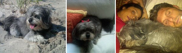 &#39;Skating with the Stars&#39; contestant and entrepreneur Bethenny Frankel&#39;s pooch Cookie is just about as famous as she is.  The Lhasa mix pooch, even has her own Twitter page! Pictured: &#40;left&#41; Bethenny Frankel, Cookie and husband, Jason Hoppy. <span class=meta>(twitter.com&#47;Bethenny &#47; twitter.com&#47;cookiedabooboo)</span>