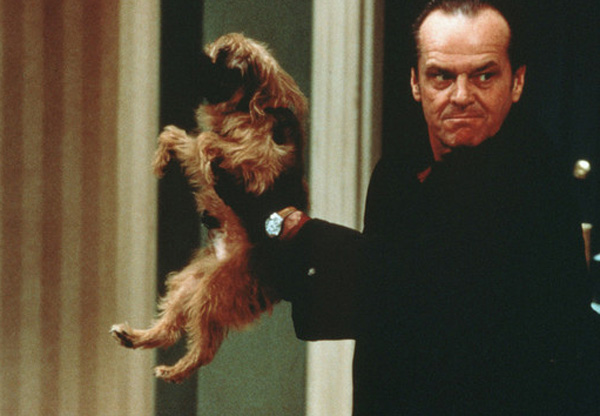 Pictured: Jack Nicholson appears with Verdel, a Brussels Griffon dog, in a scene from the 1997 film 'As Good As it Gets.'
