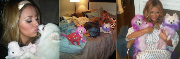Former Danity Kane member Aubrey O&#39;Day is never far from her pups, Ginger &#40;pink&#41; and Mary Ann &#40;purple&#41;.  O&#39;Day was criticized in 2009 for constantly dying the fur of her Maltese, Gingerr. She told Us Magazine that she makes sure her vet approves any of the dyes she uses. <span class=meta>(twitter.com&#47;AubreyODay)</span>