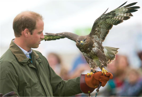 Prince William, Duke of Cambridge, holds a Harris Hawk during a falconry demonstr