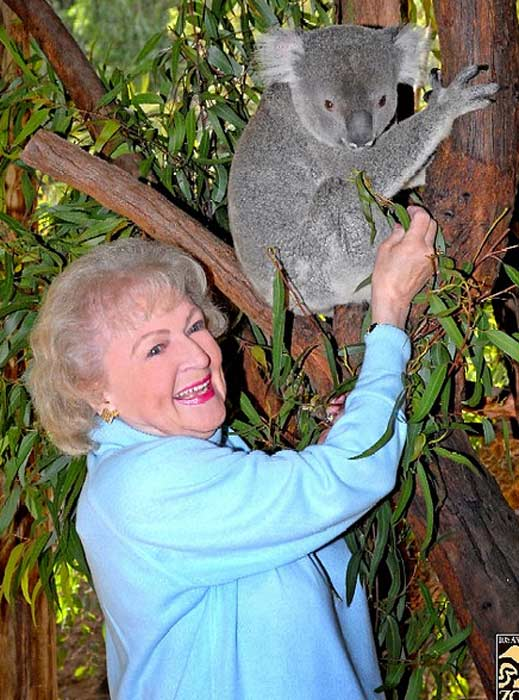Pictured: Betty White, who is Chairman of the Greater Los Angeles Zoo Association (GLAZA), poses with a koala at the L.A. Zoo.