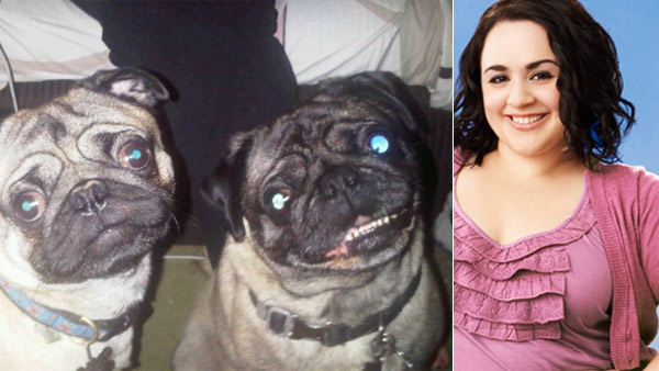 Nikki Blonsky from the movie &#39;Hairspray&#39; and the defunct ABC Family show &#39;Huge&#39; Tweeted this photo of her two pugs, Frankie and Rocky, on June 24, 2011. <span class=meta>(yfrog.com&#47;kjzsulxj &#47; twitter.com&#47;NikkiBlonsky)</span>