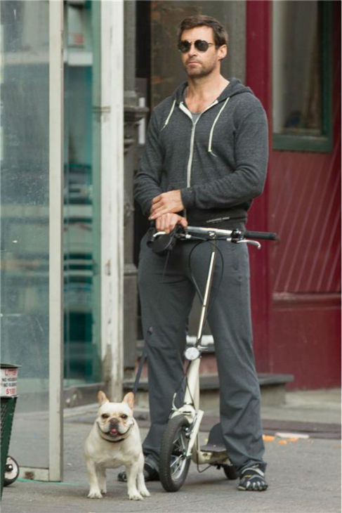 Hugh Jackman rides a scooter and walks his family's dog, Dali, in New York City on Oct. 2, 2013.