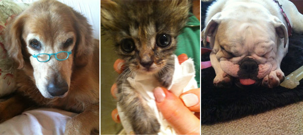 Pictured: Denise Richards' pets: (L to R) Tina,...