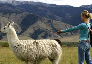 Cameron Diaz appears alongside a llama in a photo taken for the MTV show 'Trippin.