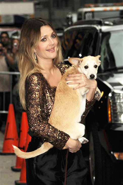"<div class=""meta ""><span class=""caption-text "">We love Drew Barrymore because she loves animals (Pictured: Drew Barrymore holds a pinscher mix dog while arriving at a taping of 'The Late Show with David Letterman' in New York on Aug. 24, 2010.) (Bill Davila / Startraksphoto.com)</span></div>"