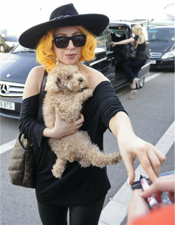 Lady Gaga, holding her dog, Fozzi, greets fans at the Hotel Imperial in Vienna, Austria on Aug. 17, 2012.