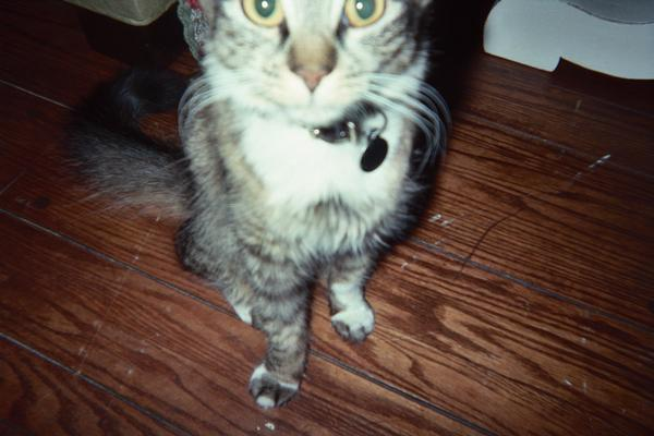 Katy Perry&#39;s cat is named Kitty Purry.  <span class=meta>(Photo courtesy of myspace.com&#47;katyperry)</span>