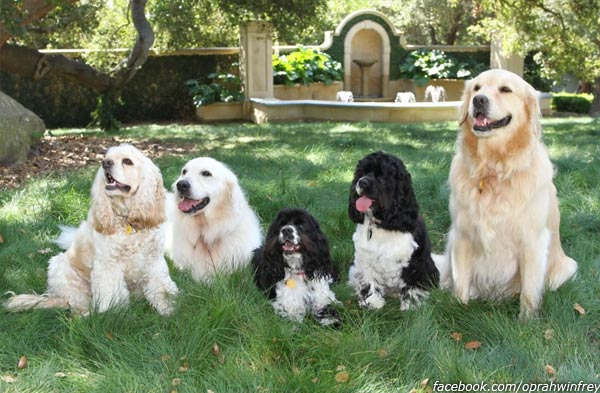 "<div class=""meta image-caption""><div class=""origin-logo origin-image ""><span></span></div><span class=""caption-text"">Oprah Winfrey's five dogs are pictured in her Facebook cover photo. Jennifer Aniston had the photo printed onto a yoga mat and gave it to Winfrey on as a 57th birthday present in 2011. (facebook.com/oprahwinfrey)</span></div>"