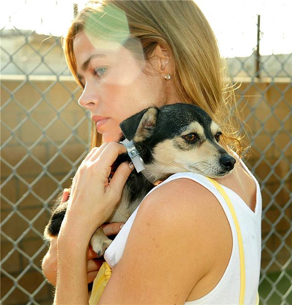 Denise Richards holds a dog at an animal shelter in Baldwin Park, California on March 22, 2010 while participating in the 'Pup My Ride' initiative for Best Friends Animal Society, in which volunteers help move dogs across the country to be adopted.
