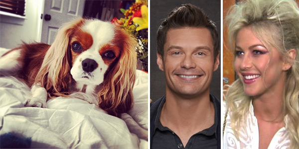 "<div class=""meta ""><span class=""caption-text "">Ryan Seacrest, host of 'American Idol,' Tweeted this Instagram photo of his and girlfriend Julianne Hough's blenheim Cavalier King Charles Spaniel, Lexi, on Thanksgiving Day - Nov. 22, 2012, saying: 'Someone just woke me up in bed.'  (The couple broke up in early 2013.)  Also pictured: Ryan Seacrest appears in a 2012 promotional photo for 'American Idol.' (center) / Julianne Hough talks to OTRC.com after 'Dancing With The Stars' on May 12, 2012. (right) (instagram.com/p/SVhluIFWTz/ twitter.com/RyanSeacrest/status/271631645868703745 / Michael Becker / FOX /)</span></div>"