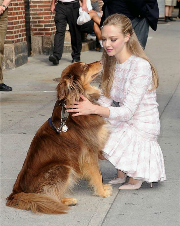 "<div class=""meta ""><span class=""caption-text "">Amanda Seyfried cuddles with her dog, Finn, after leaving the Ed Sullivan Theater in New York City on July 30, 2013. She had appeared on 'The Late Show With David Letterman' to promote her newest film, 'Lovelace.' (Humberto Carreno / startraksphoto.com)</span></div>"