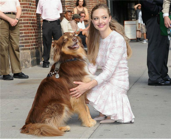 Amanda Seyfried cuddles with her dog, Finn, after leaving the Ed Sullivan Theater in New York City on July 30, 2013. She had appeared on &#39;The Late Show With David Letterman&#39; to promote her newest film, &#39;Lovelace.&#39; <span class=meta>(Humberto Carreno &#47; startraksphoto.com)</span>