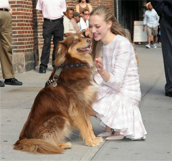Amanda Seyfried cuddles with her dog, Finn, after leaving the Ed Sullivan Theater in New York City on July 30, 2013. She had appeared on &#39;The Late Show With David Letterman&#39; to promote her newest film, &#39;Lovelace.&#39; &#40;See more PHOTOS of Amanda Seyfried with her dog.&#41; <span class=meta>(Humberto Carreno &#47; startraksphoto.com)</span>
