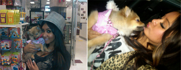 &#39;Jersey Shore&#39; star, Nicole &#39;Snooki&#39; Polizzi has a dog named Gia, who she calls her &#39;princess&#39;. <span class=meta>(twitter.com&#47;Sn00ki)</span>