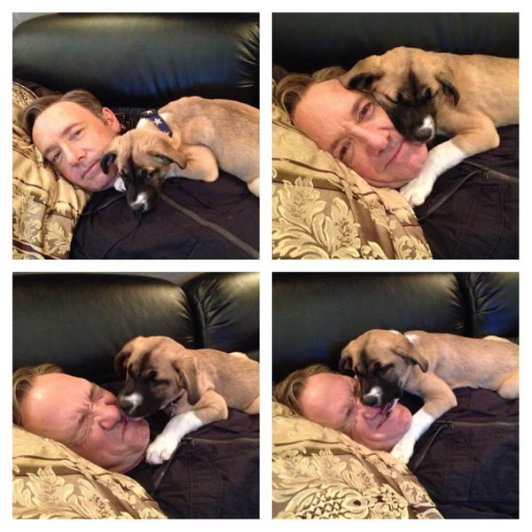 Kevin Spacey appears in a photo from his official Twitter page on May 4, 2013 with his puppy Boston. - Provided courtesy of twitter.com/kevinspacey