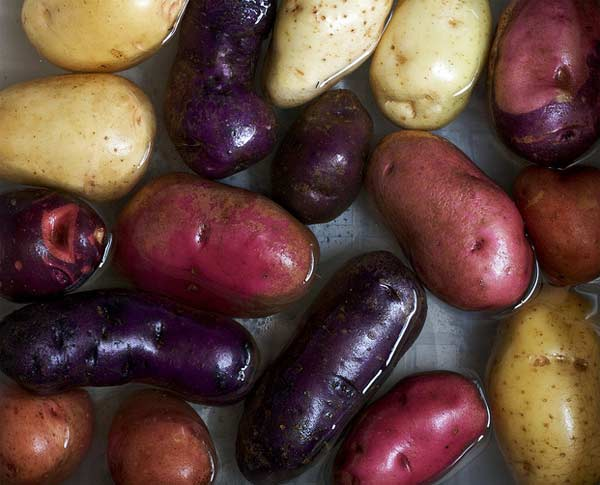 A photo of heirloom potatoes.