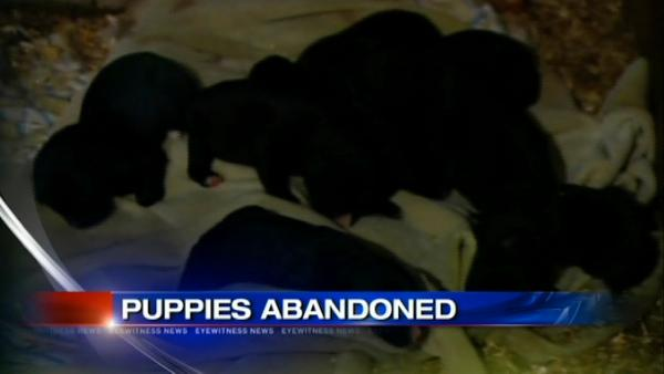 VIDEO: Dog, puppies dumped