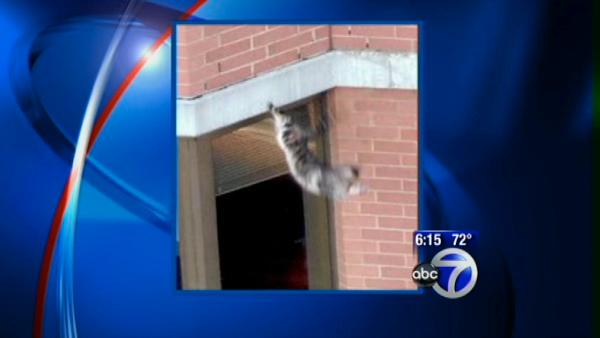 VIDEO: Cat falls from high rise