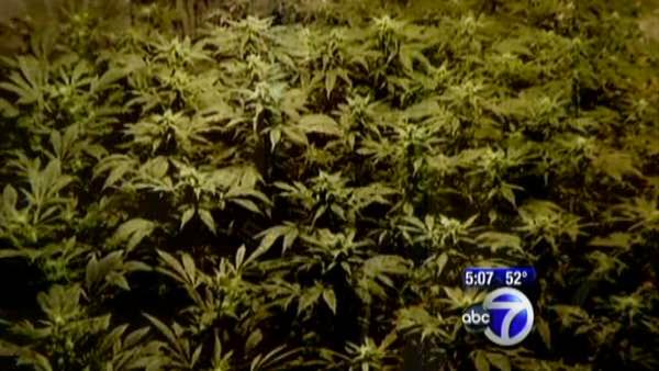 Record marijuana bust in New Jersey