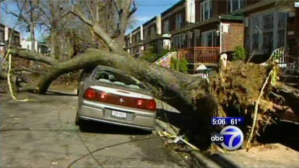 Fallen trees destroy sidewalks in Brooklyn