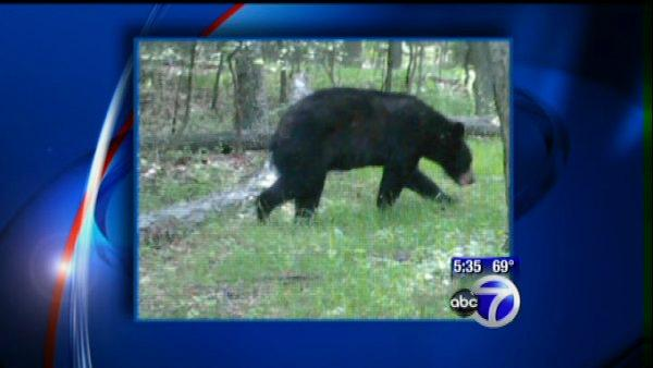 Family of bears on the loose in NJ