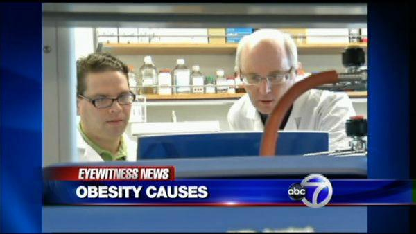 Could genes predict obesity risk?