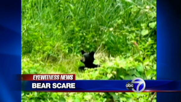 Bear remains on the run in Englewood, NJ