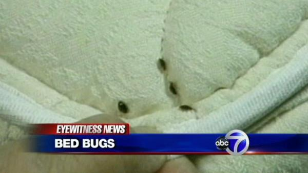 Why so many bed bugs in local businesses?