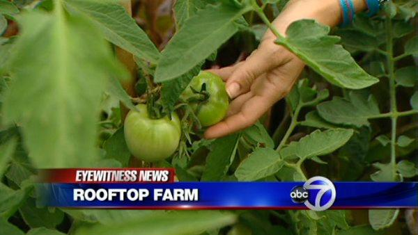 Rooftop farm in Queens