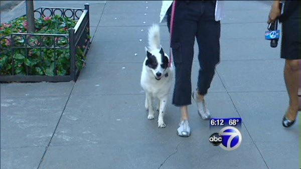 Canine crackdown at UWS condo