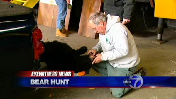 Bear hunt begins in NJ amid opposition